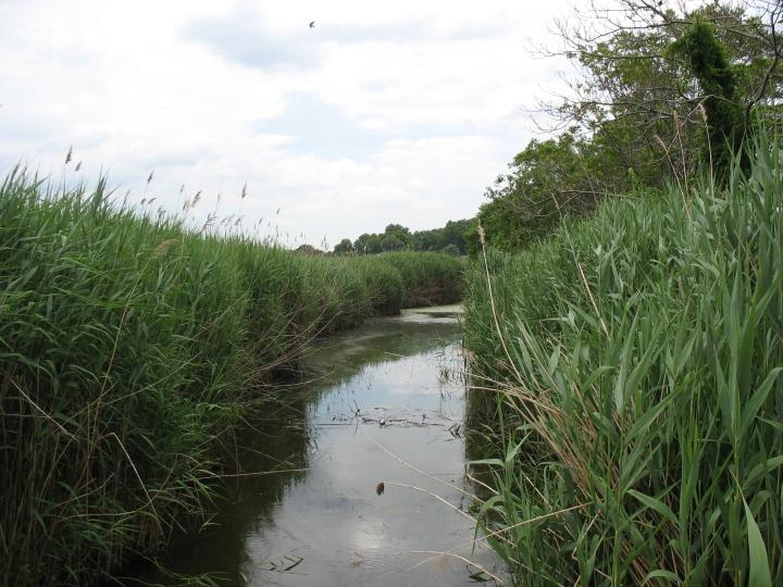 Meadowlands